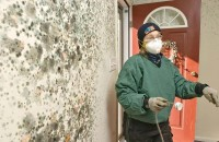 mold removal Connecticut